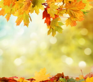 autumn-background